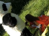 Caperucita roja se folló a un panda - Jovencitas
